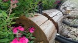 מתקן לאופניים תוצרת בית בתוך בול עץ