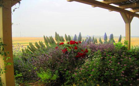 גינה בכפר מנחם